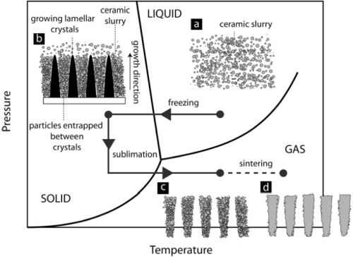 directionally solidified freeze